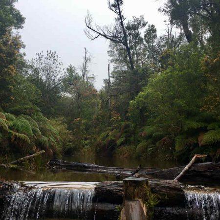 Chile baños de bosque formacion