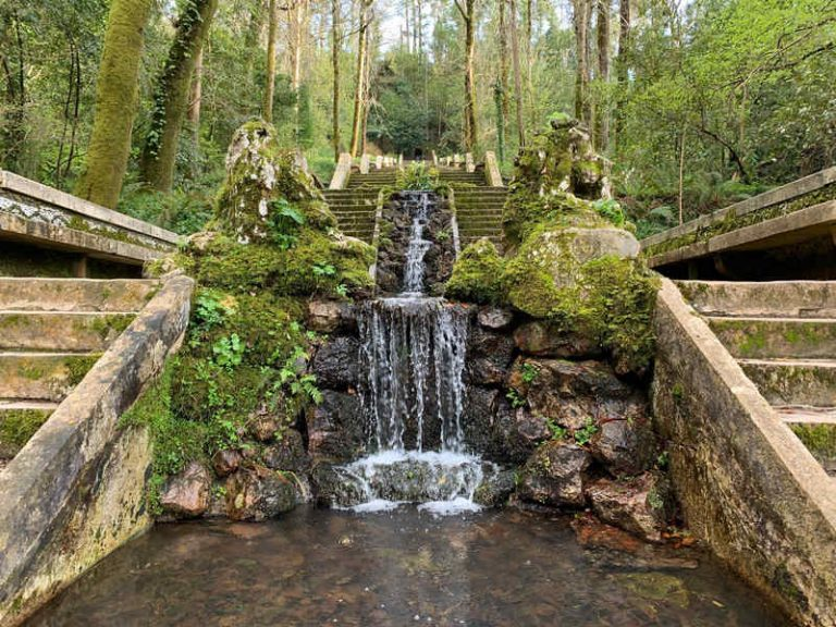 Portugal FB forest therapy hub