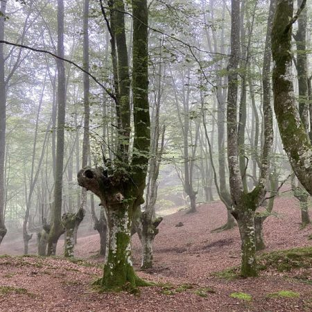 Urkiola_FT_forest_therapy_hub__3-