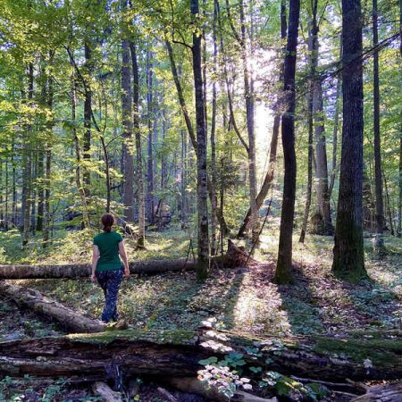 polonia_FT_forest_therapy_hub__3