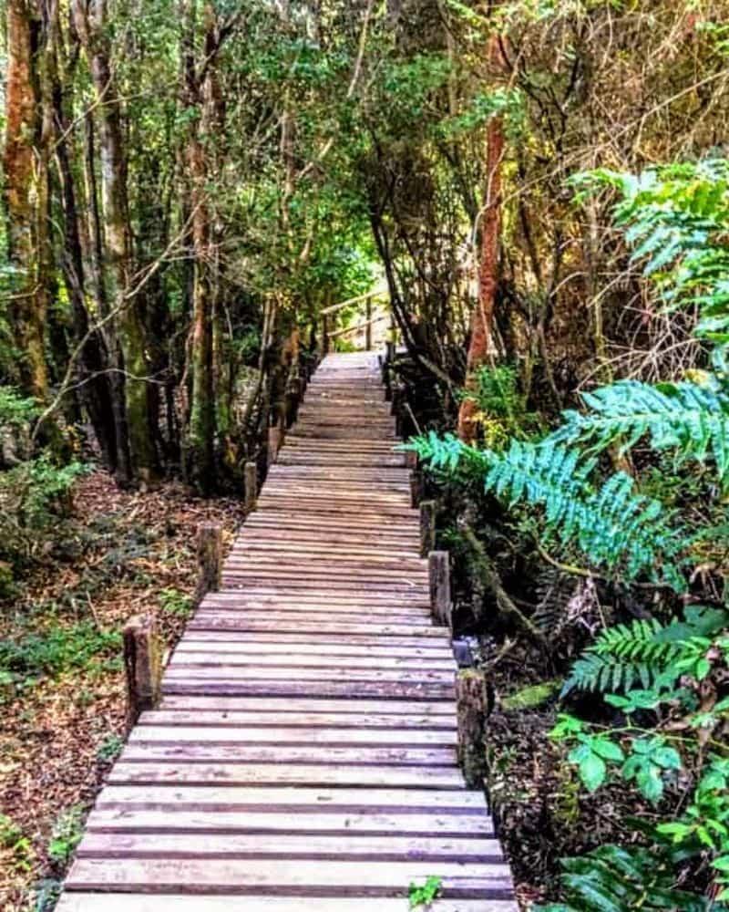Baños de Bosque en Chile