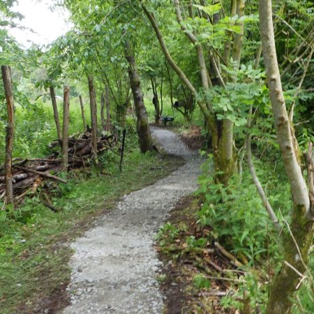 Forest Therapy Practitioner Training